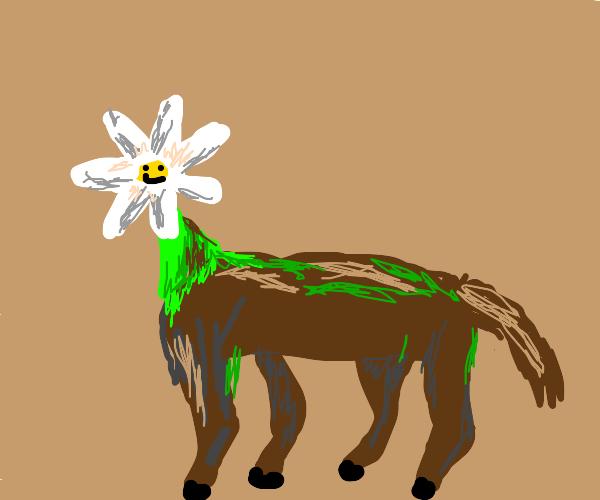 Daisy centaur