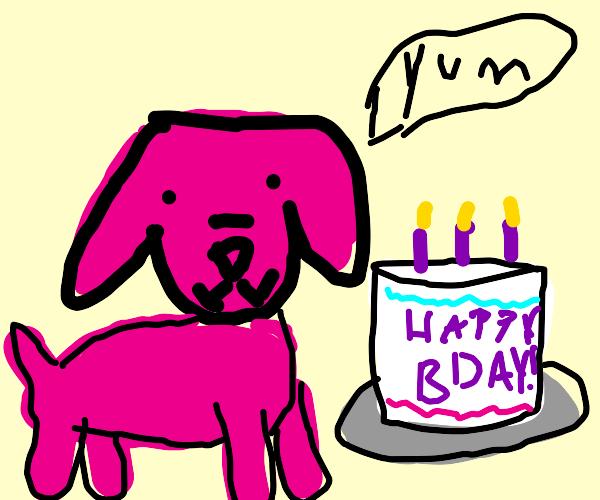 Pink dog has a birthday cake!!!