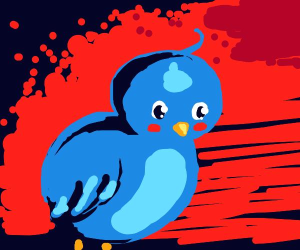 Baby blue bird