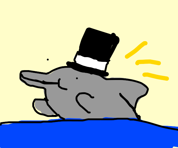 Dolphin in a top hat