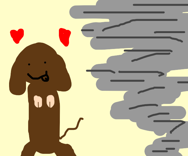 A dog is in love with a tornado