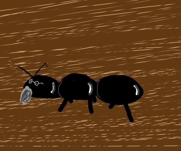 Elderly ant