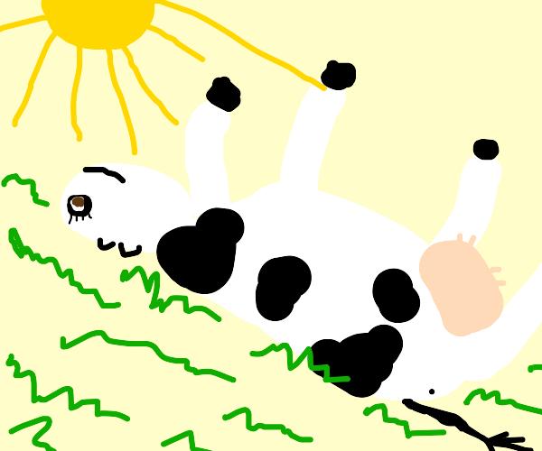 Melisa cow sunbathing