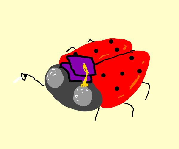 Ladybug professor