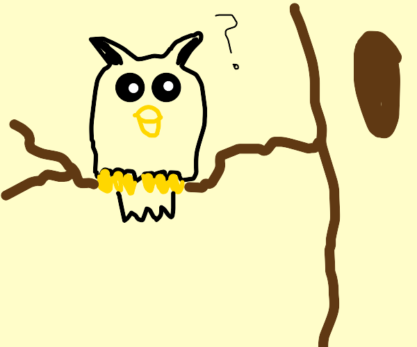 Owl wants to know what you're doing