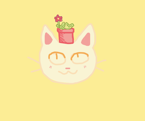 cat enjoys carrying potted plant on its head