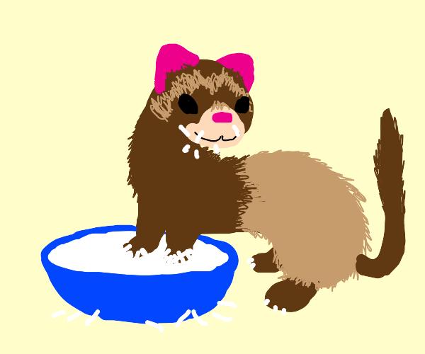Ferret eating Rice