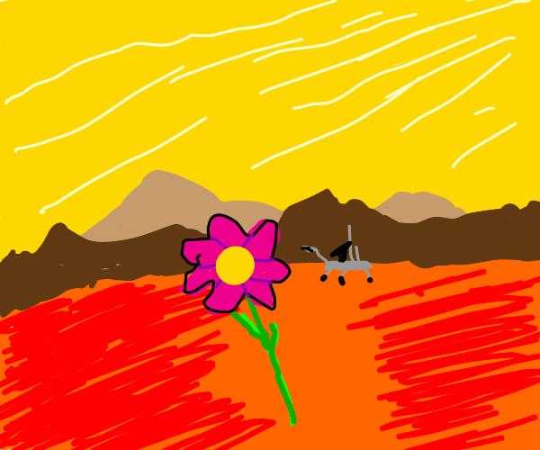 Flower on Mars