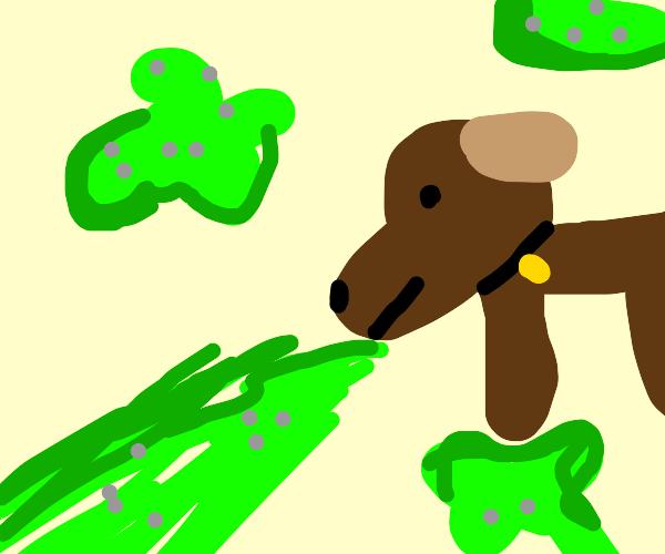 Dog vomits everywhere