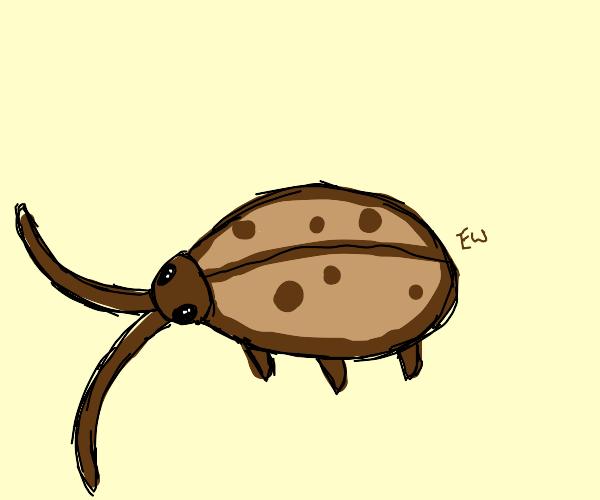 Cookie Cockroach