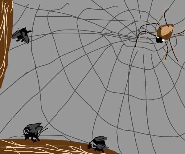 flies around spider web