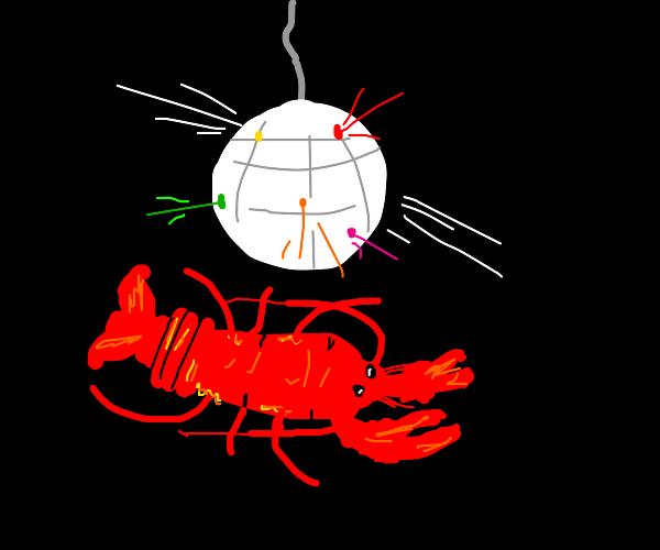disco lobster