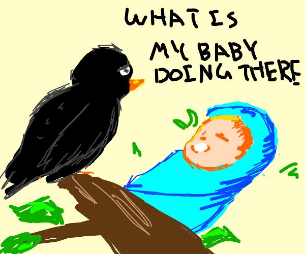 Bird thinks human child is her baby