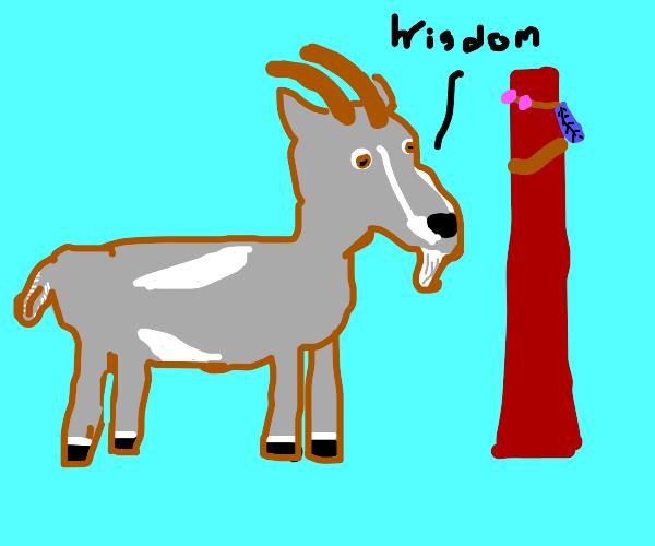 Goat shaman