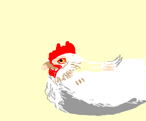 Plump Chicken