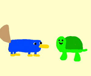 Platypus and turtle together