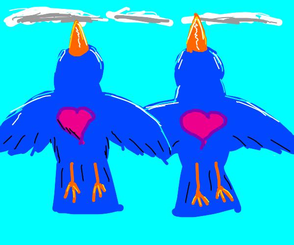 blue love birds flying majestically