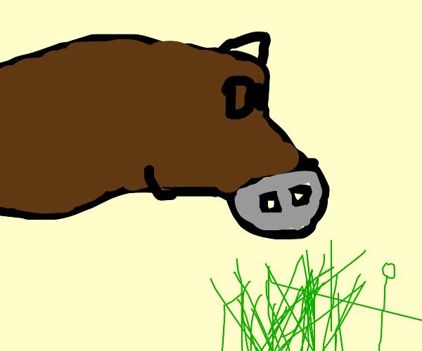 Doughy Donkey