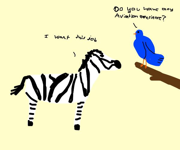 zebra interviewing to become a bird