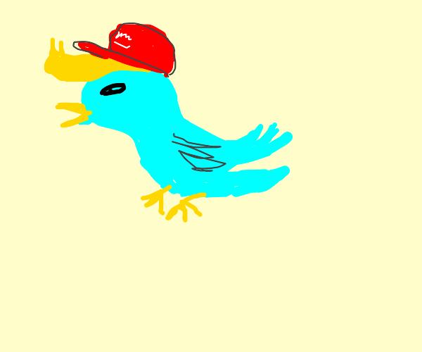 First Panel pidgeon bird