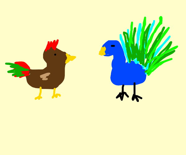 chicken jealous of peacock