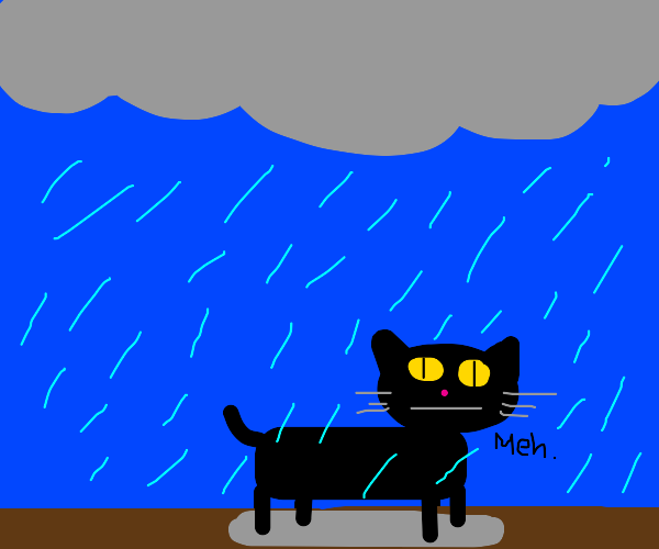 Black cat largely indifferent whilst in rain.