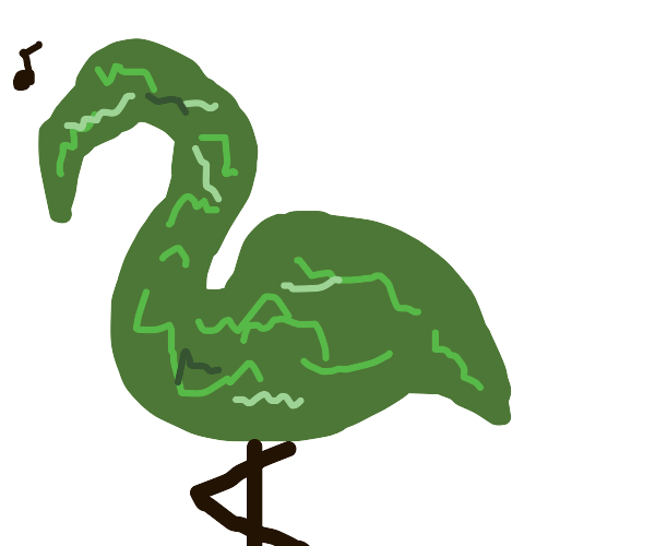 Shrubbery Flamingo warbles a wonderful tune.