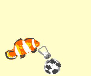 Clownfish salting a Soccer Ball
