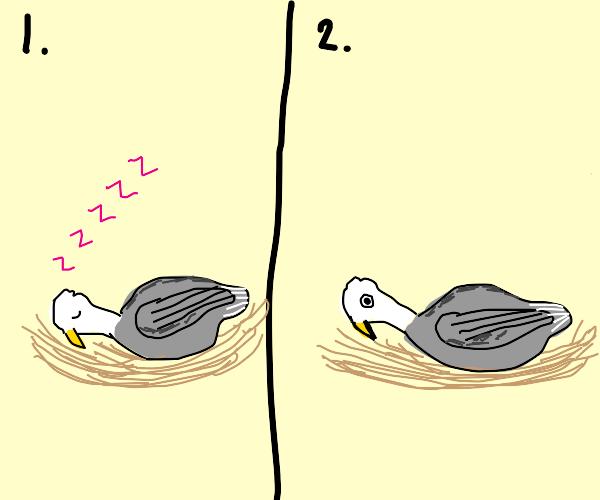 Awakening Eagle