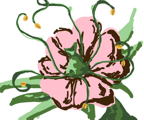A flower with disturbingly large stamen.