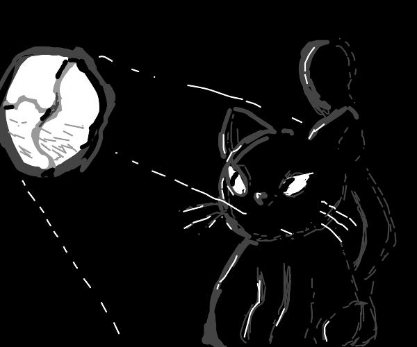 black cat stares through broken window
