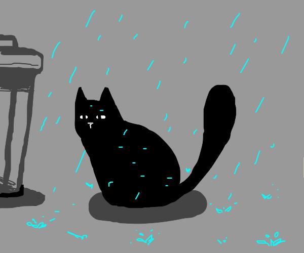 Stray cat caught in the rain