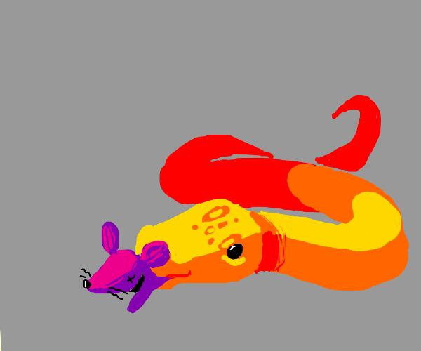 Snake eating a rat