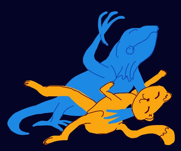 A cat dances the bolero with an iguana