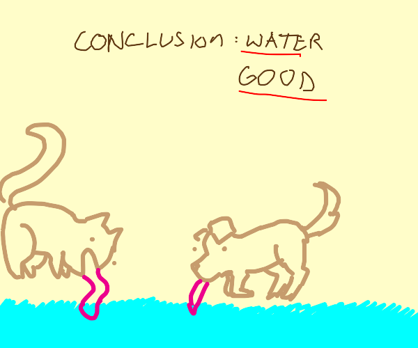 Cat and dog love water