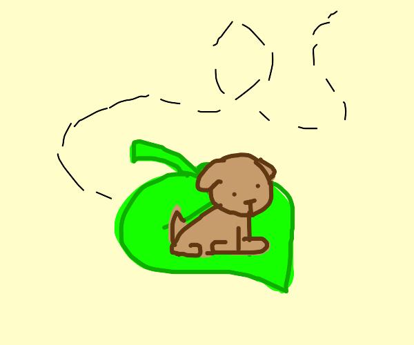 puppy floating on a leaf