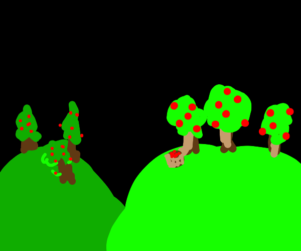 Apple trees on a hill