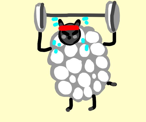 Sheep Weightlifting