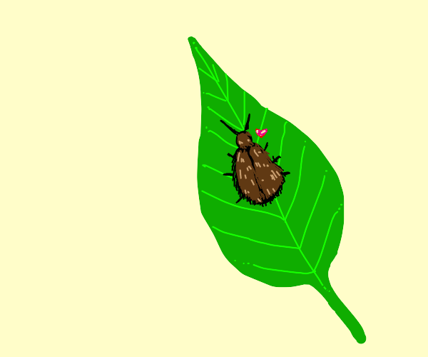 Fuzzy Beetle