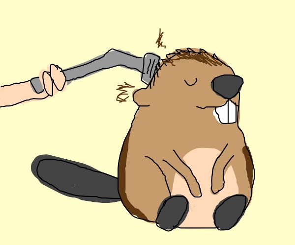 I shaved my beaver :)