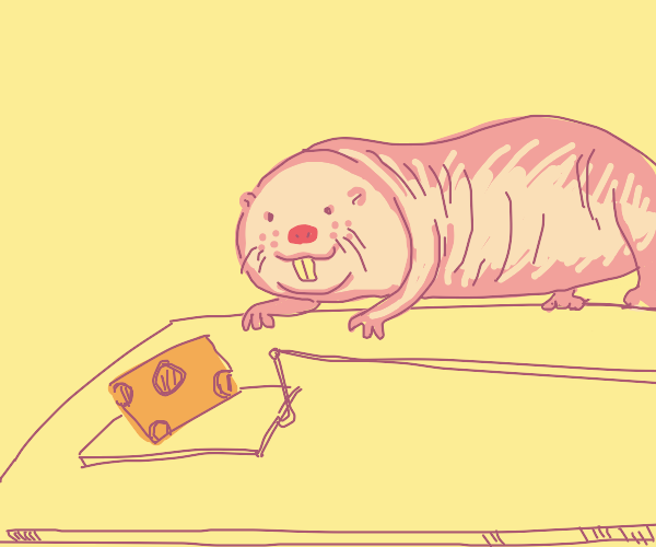 naked rat spotted the cheese trap