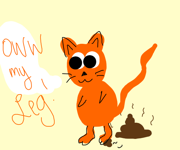 Orange Cat Stepped in poo, broke its leg
