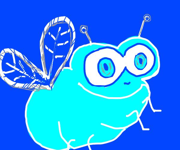 Fat blue fly