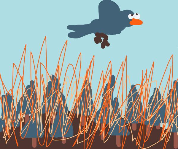 blue bird flies over silently burning forest