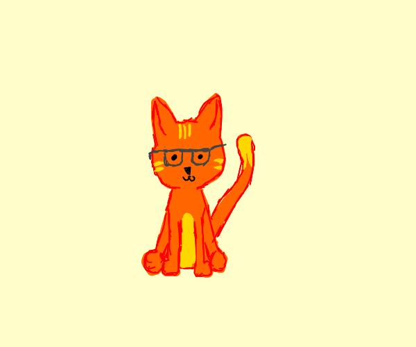 Dichromatic cat in glasses