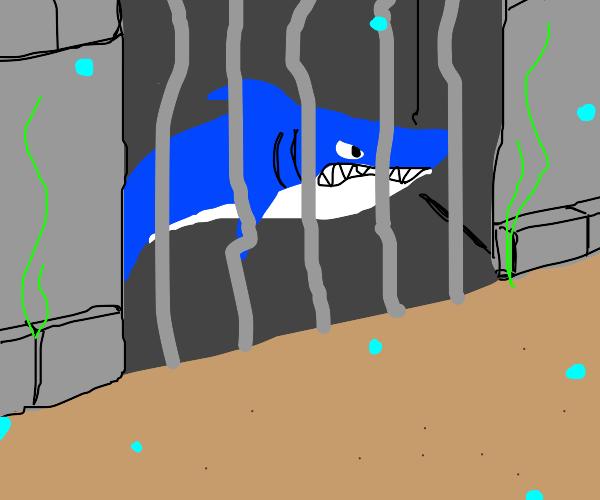 Underwater jail for sharks