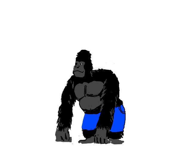 gorilla wearing jorts