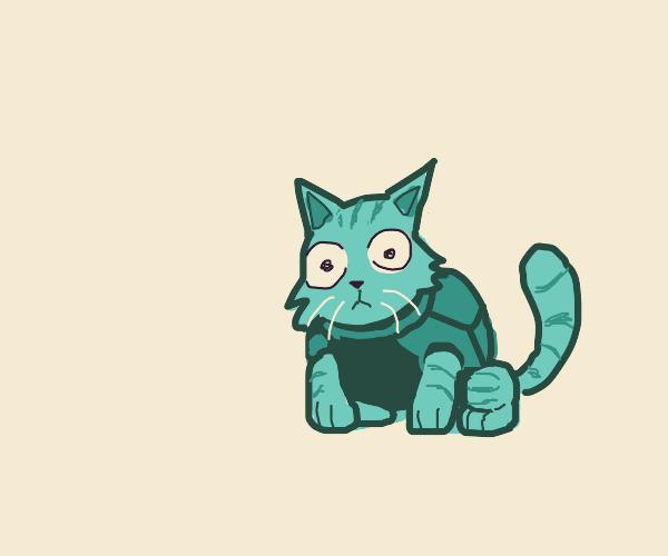 Turtle cat