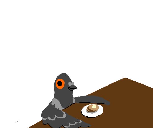 pigeon eating pancake