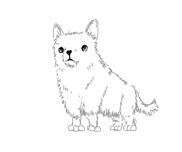 Floofy white doggo